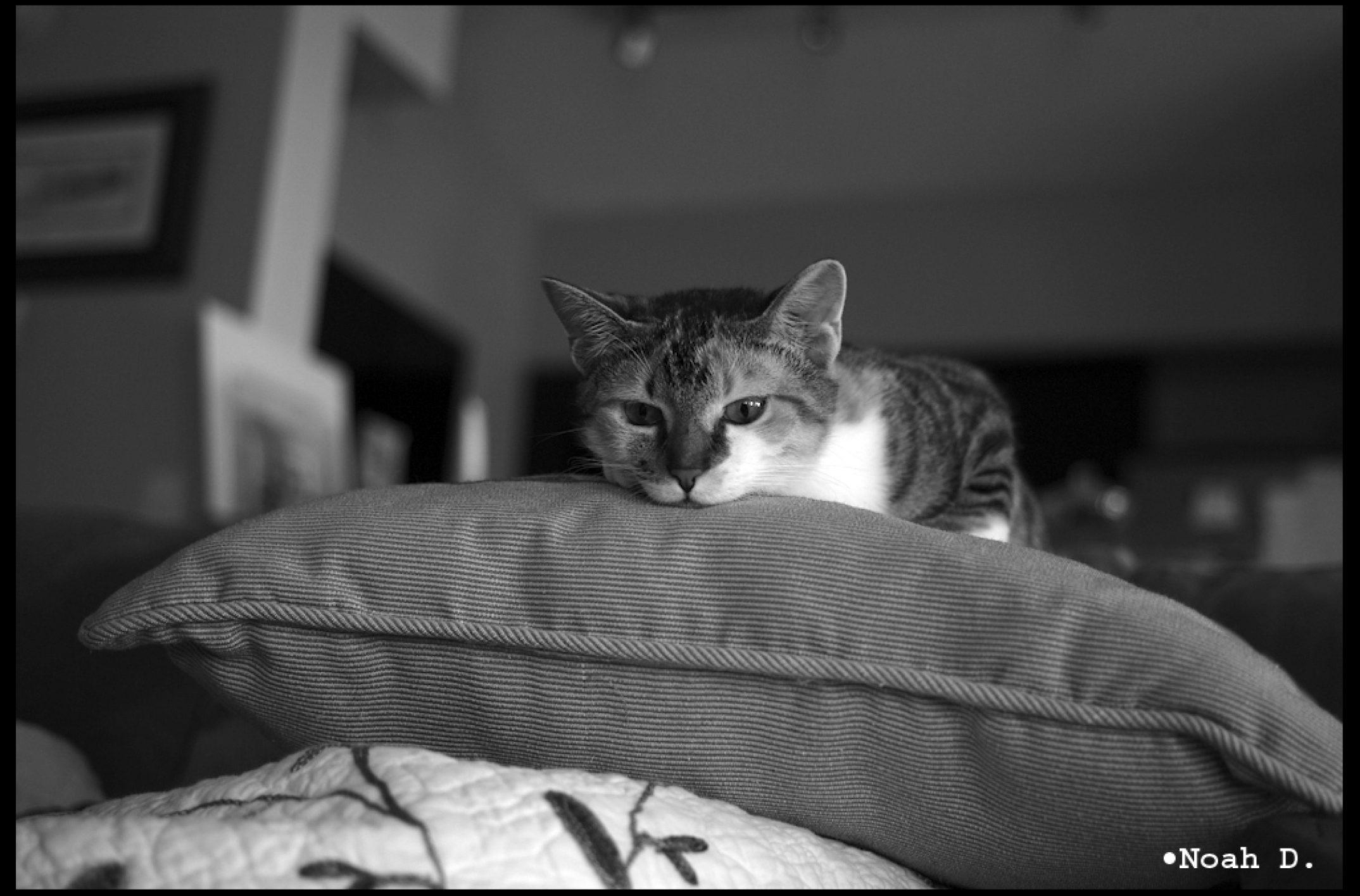 Cat posts and etc…