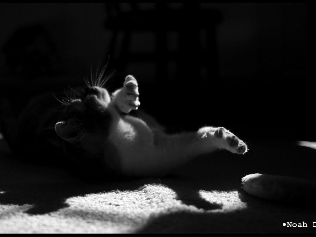 Rolls on the floor…