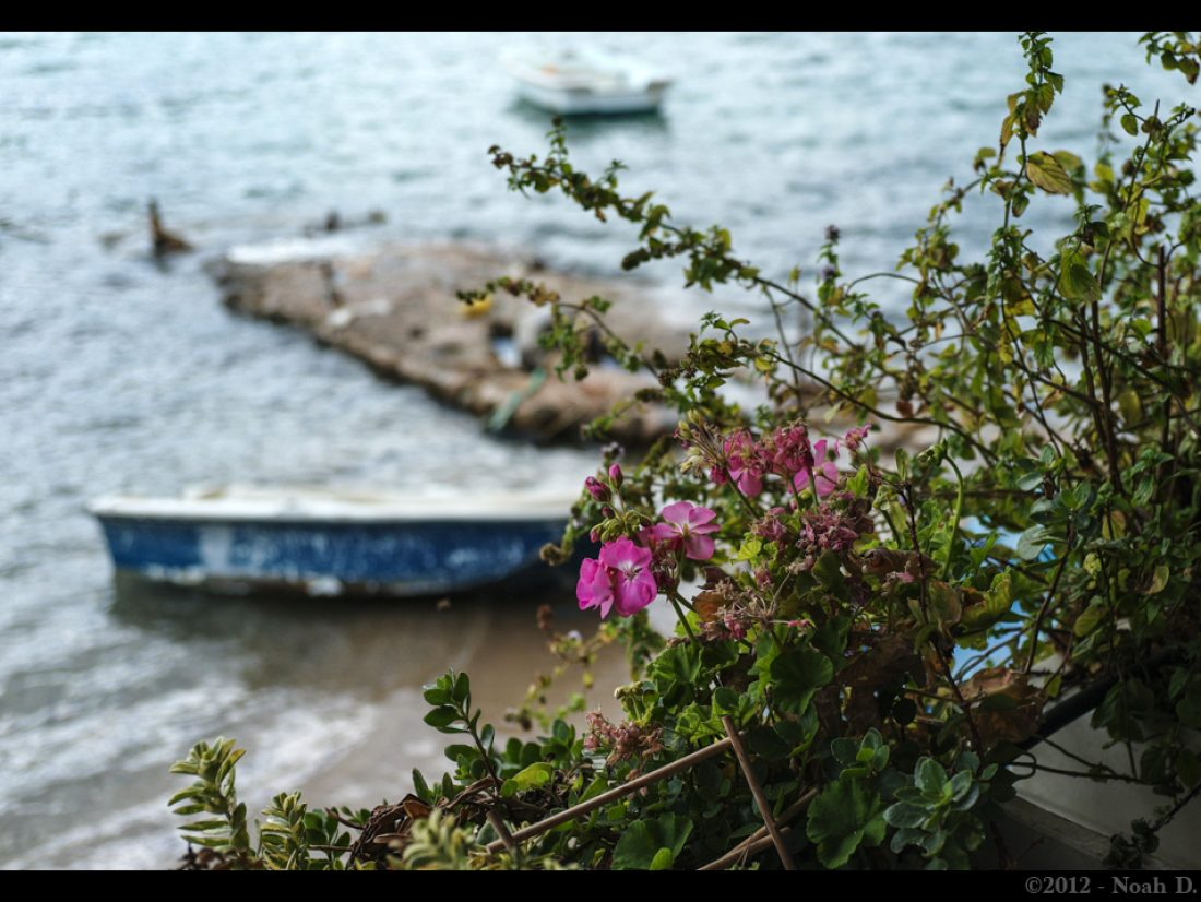 Just a flower by a bay…
