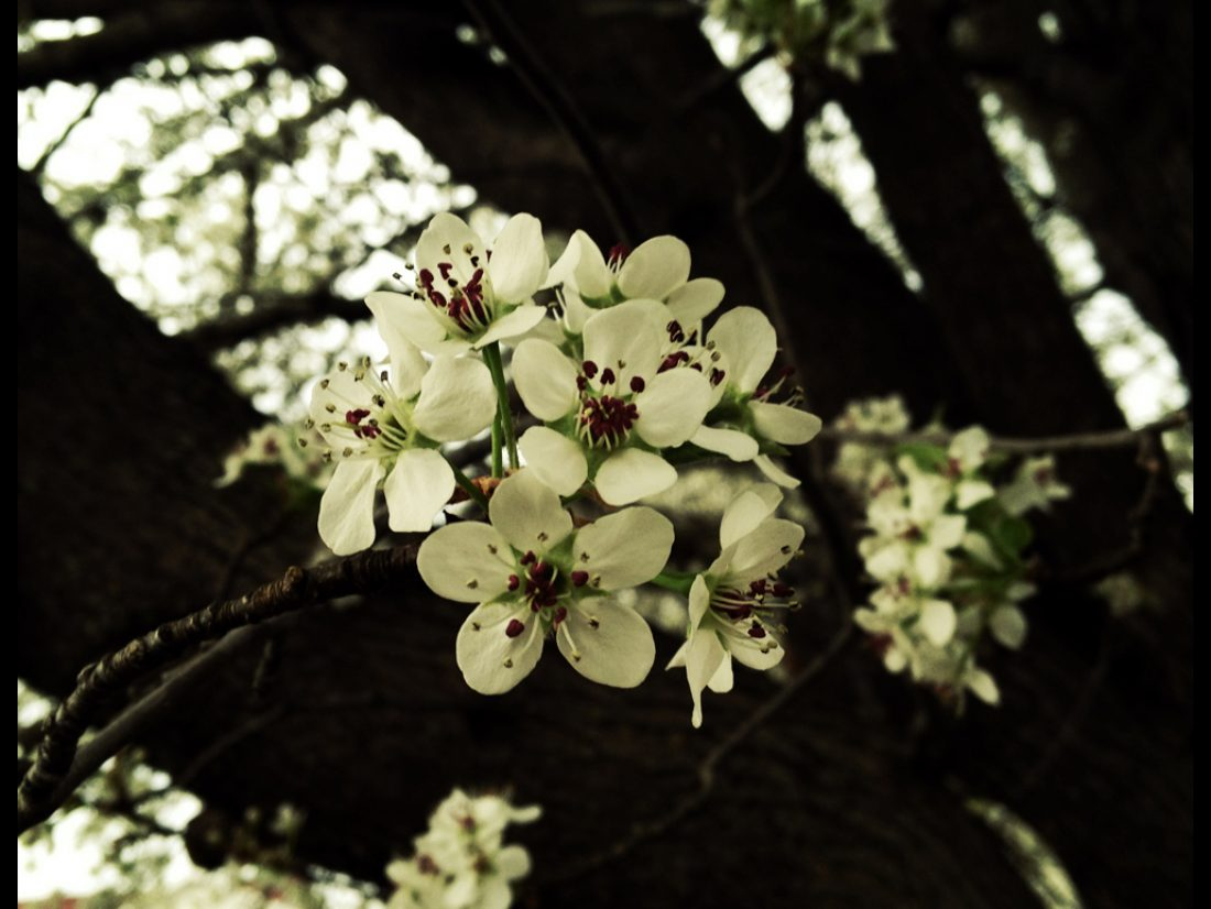 Settle for spring…