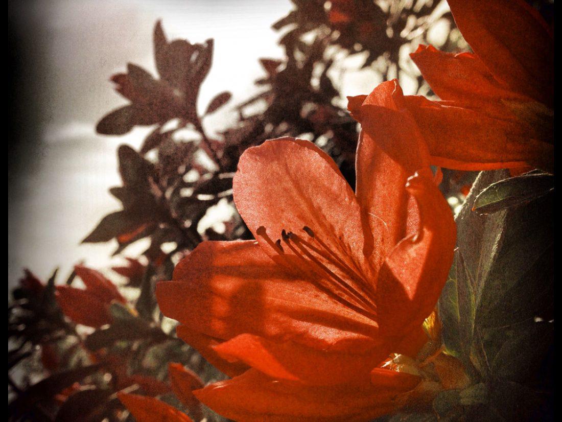Morning blooms…