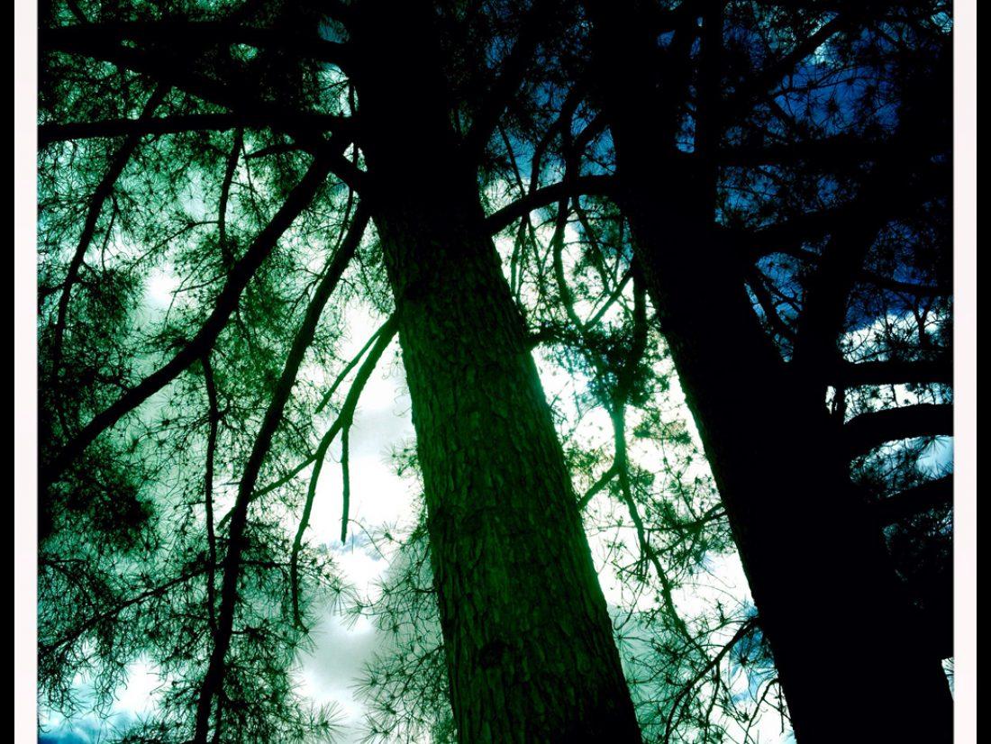 Trees before rain…