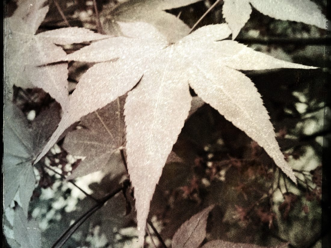 Leaves after rain…