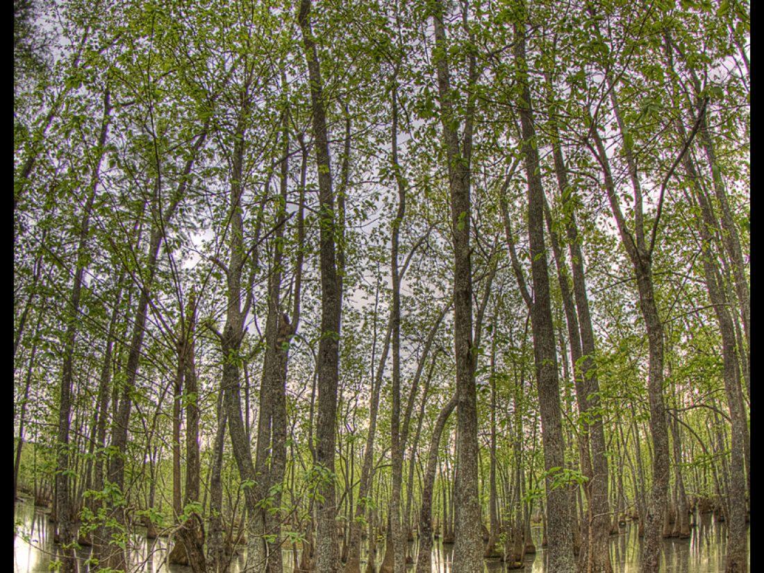 Swampy beauty…