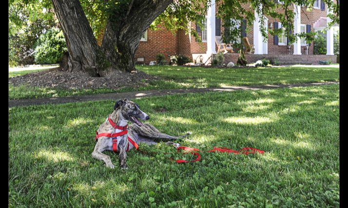A dog under a shade tree…